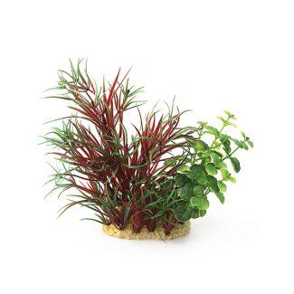 ArtUniq Lagarosiphon madagascariensis Red mix 15