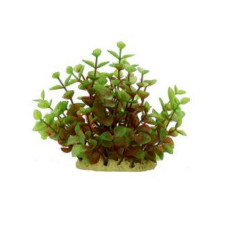 ArtUniq Ludwigia red-green 15