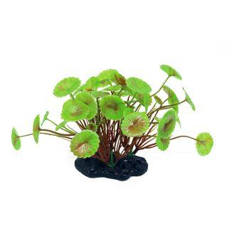 ArtUniq Hydrocotyle verticillata 10-12