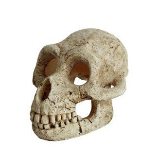 ArtUniq Gorilla Skull