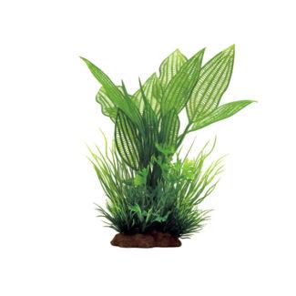 ArtUniq Aponogeton madagascariensis mix 20