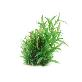 ArtUniq Hygrophila siamensis & bamboo 20
