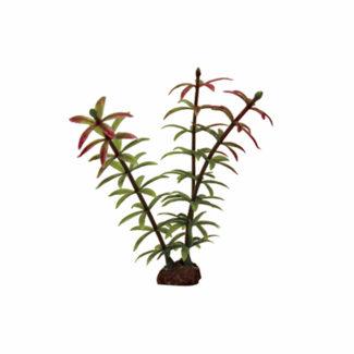 ArtUniq Elodea red-green Set 6×10