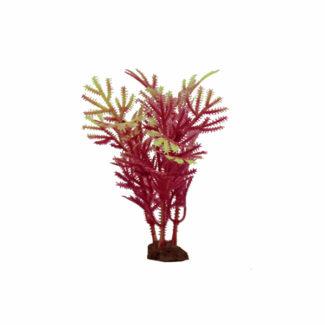 ArtUniq Hottonia red-yellow Set 6×10